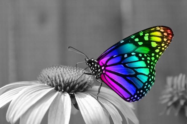butterfly-286280_1280